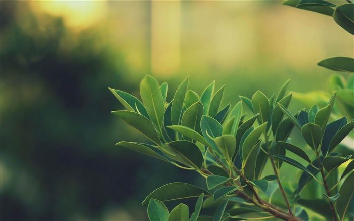 Fresh_aesthetic_green_small_leaves Plant_wallpaper_medium