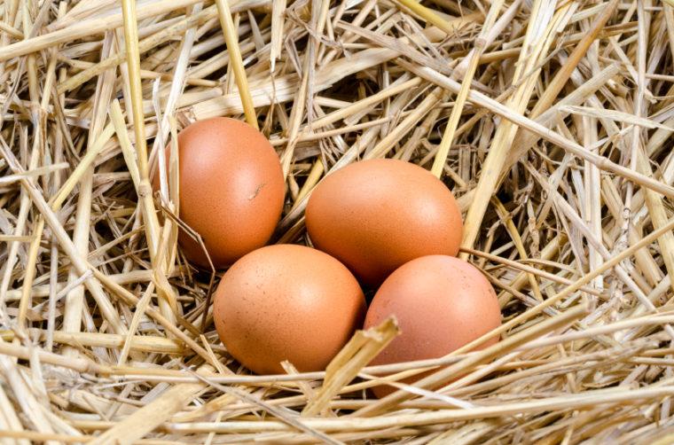 Fresh Eggs In The Nest
